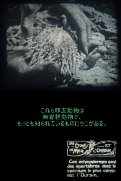 c1920 - 9.5mm『ヒトデとウニ』01