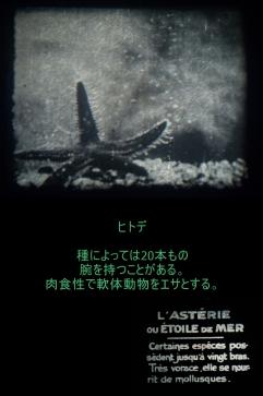 c1920 - 9.5mm『ヒトデとウニ』02