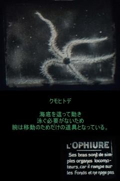 c1920 - 9.5mm『ヒトデとウニ』03
