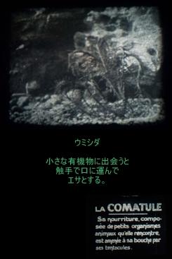 c1920 - 9.5mm『ヒトデとウニ』04