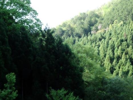 20150430-柳さく子地蔵詣で07